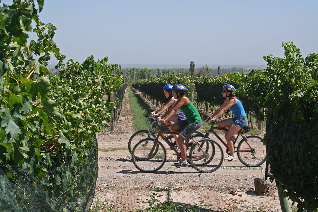 Bicycle tourism in Italy can often involve vineyard tours ... photo by CC user Turismo Baquía on wikimedia commons